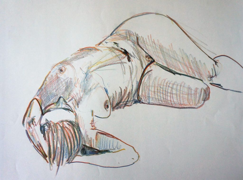 Akt Kreide, 70 x 50 cm, 2010